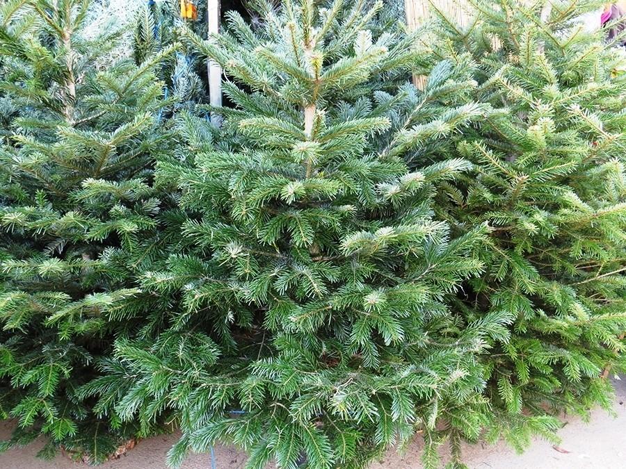 Непроданные новогодние ёлки отдали вМосковский зоопарк накорм звериным