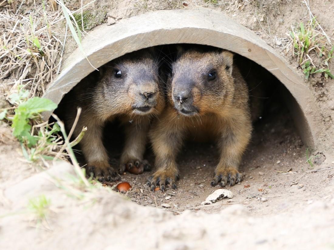Размещены потрясающие работы сконкурса самых забавных снимков диких животных