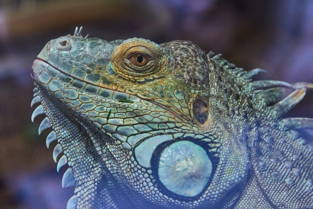 В столицеРФ для собственников экзотических животных организуют обучающие курсы