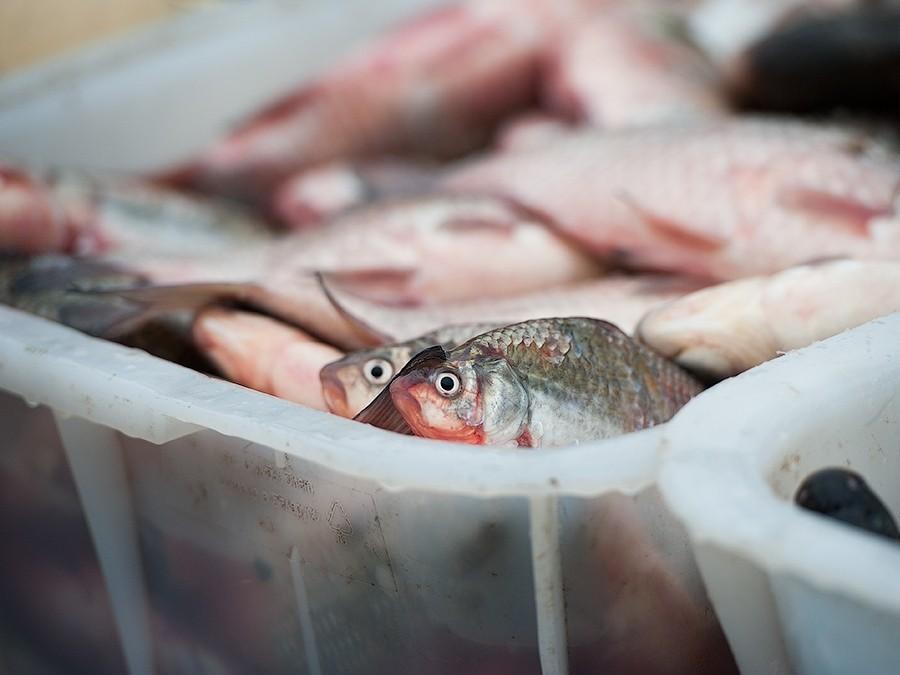 Рыба и морепродукты избавят детей и подростков от бессонницы