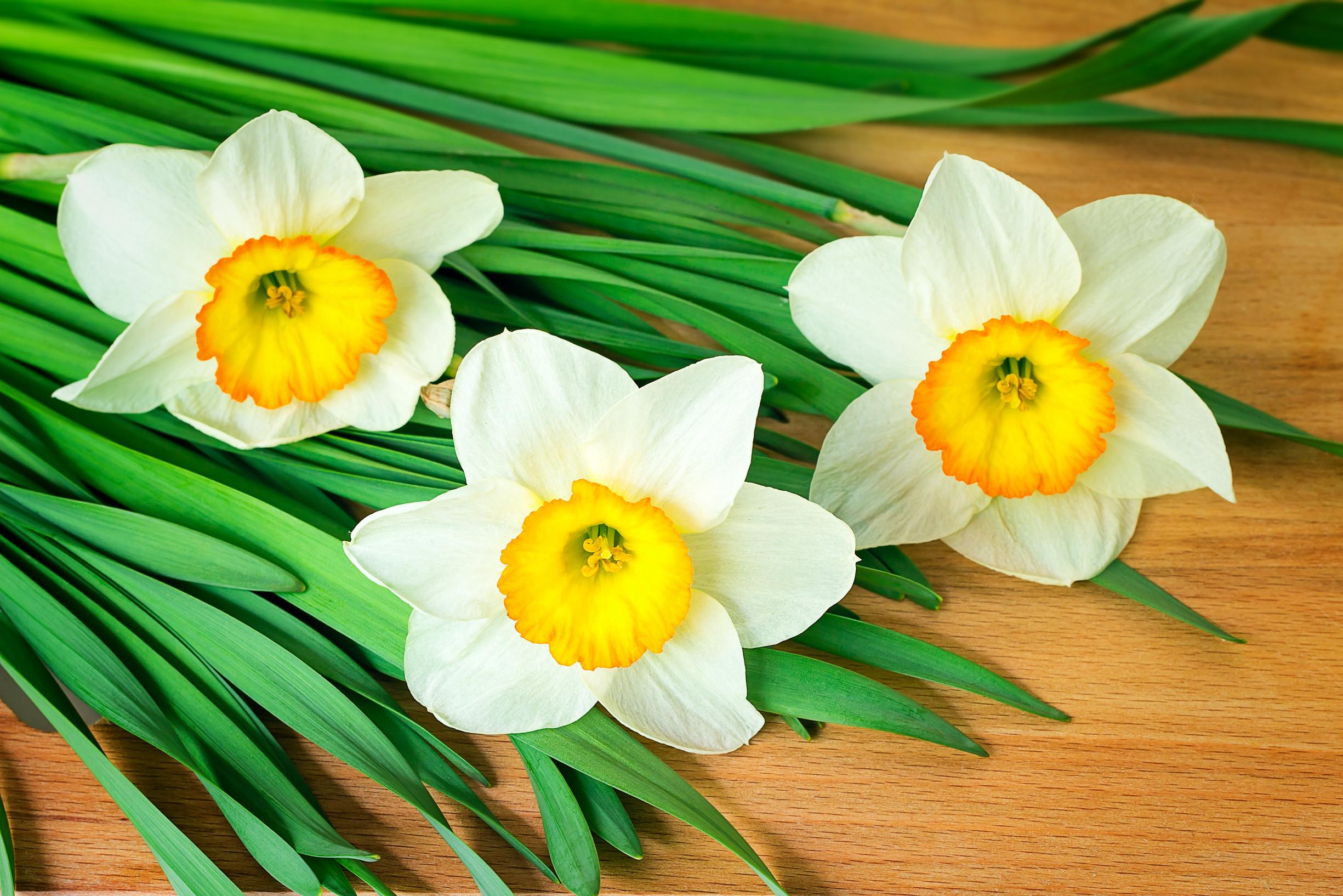 Цветы комнатные по знаку зодиака близнецы фото