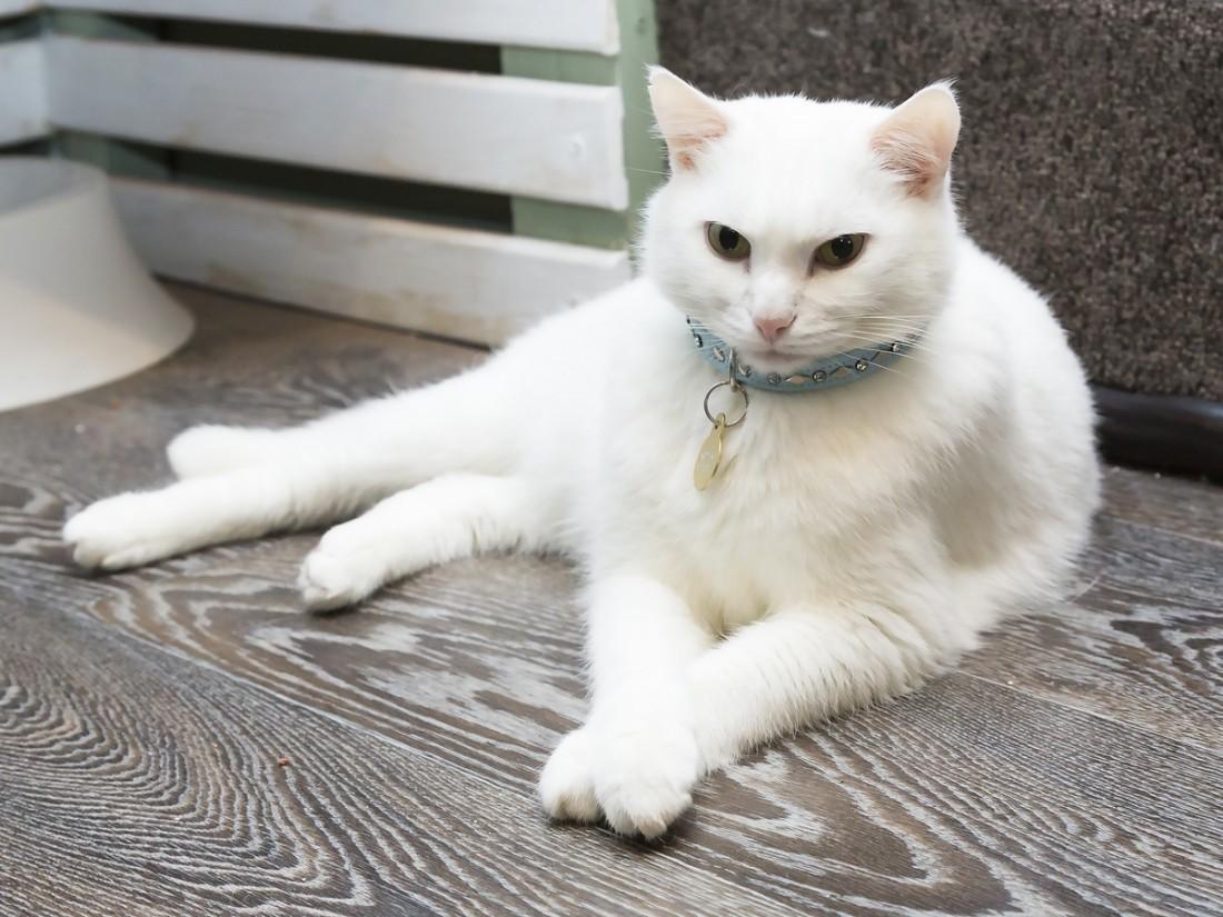 ВЯпонии отель прославился благодаря услуге «кот начас»
