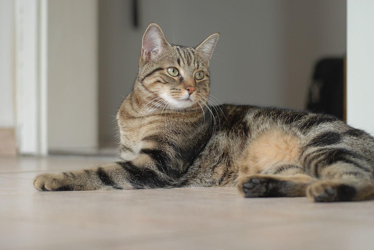 Пенсионер приютил всвоем доме 300 кошек