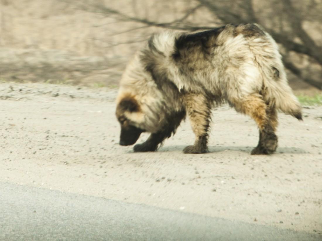 Вгостях ребенка насмерть загрызла хозяйская собачка