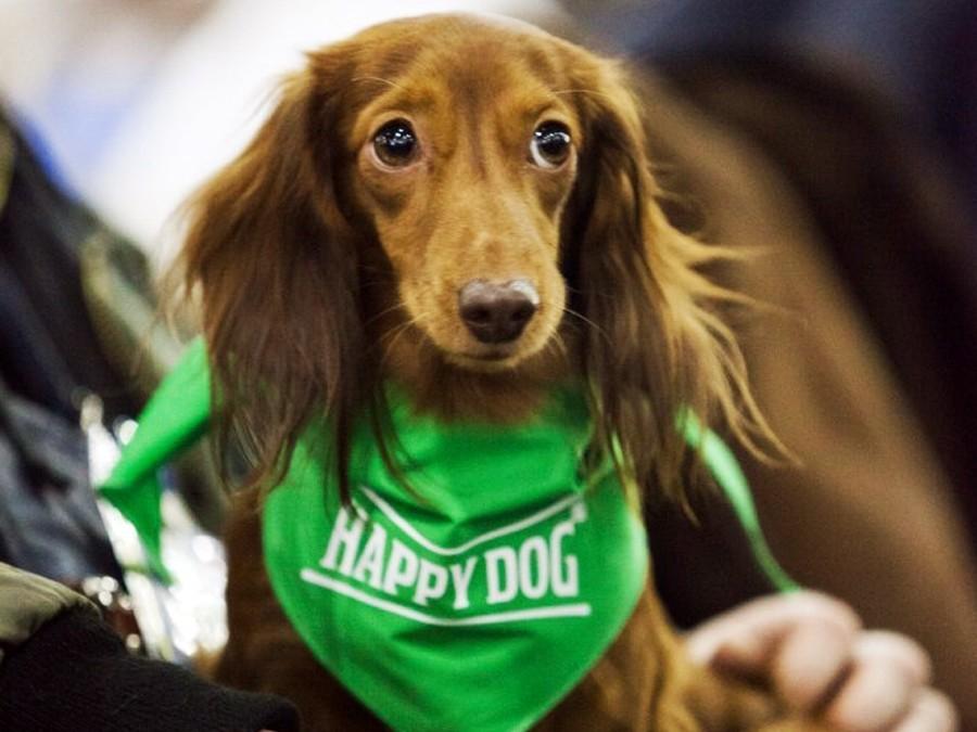 НаОлимпиаде канадская фигуристка спасла щенка отмясной индустрии