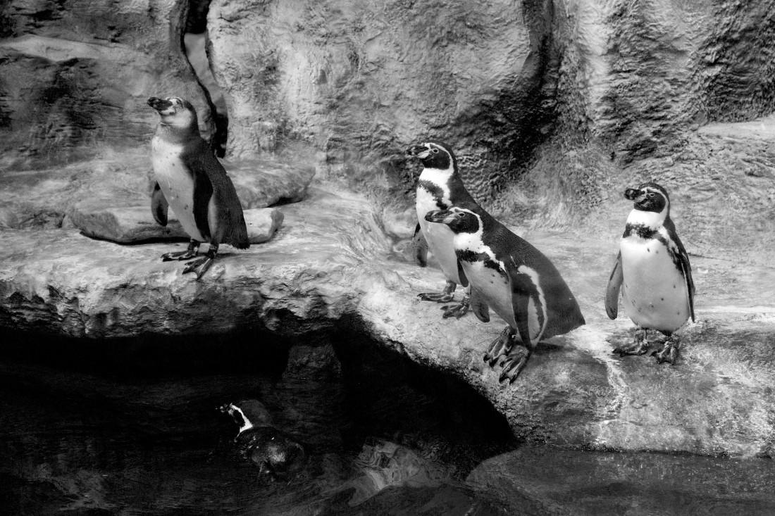 ВАнтарктиде пингвин прокатился влодке сучеными