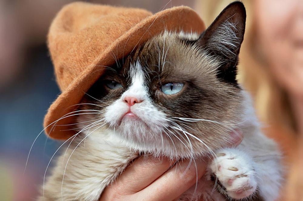 «Сердитая кошка» принесла собственной хозяйке сотни тыс. долларов