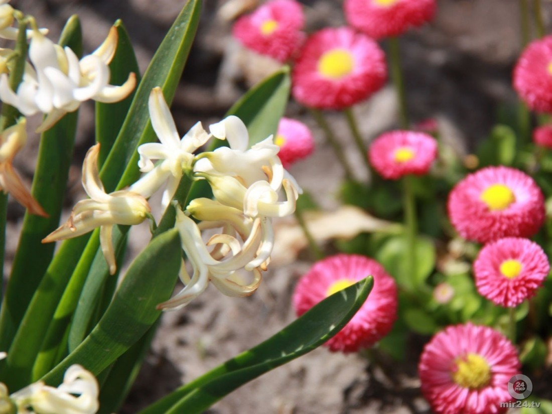 Танец растущих семян для гостей «Аптекарского огорода»