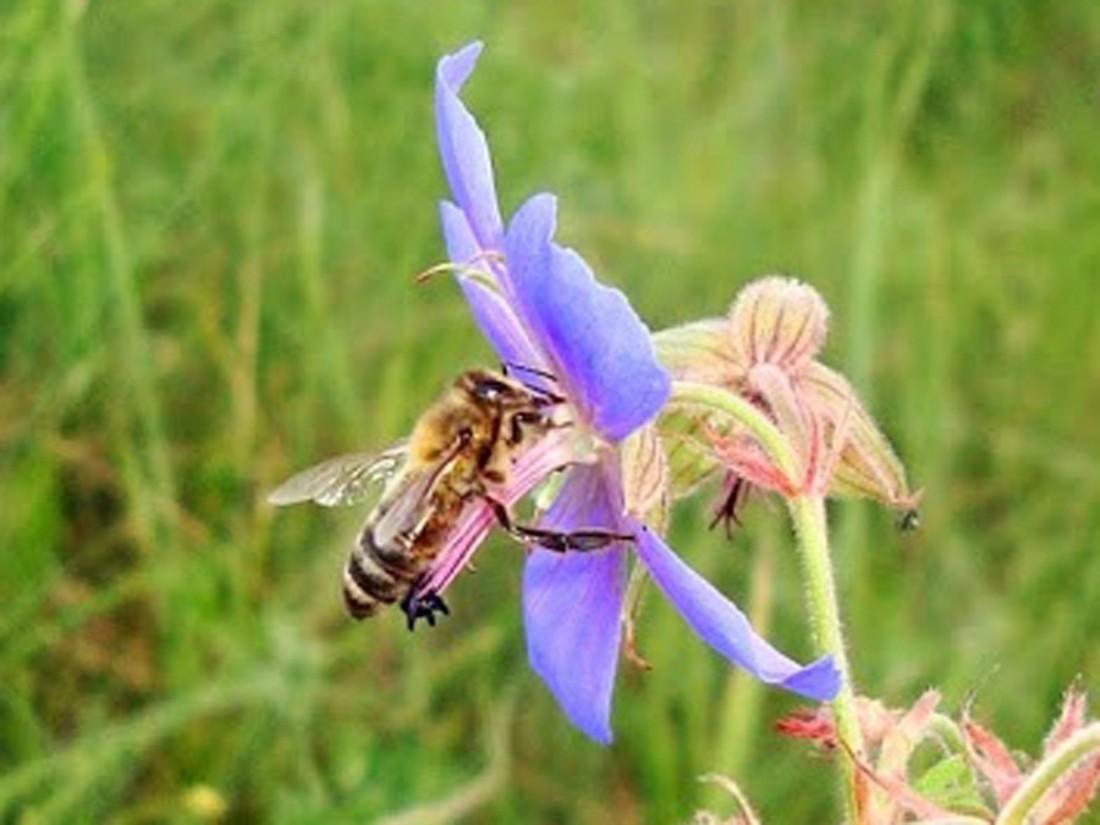 Народные приметы на 10 октября – день Саватия Пчельника (Саватий Соловецкого)