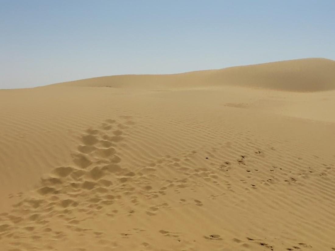 Климатологи бьют тревогу: Площадь Сахары возросла на10%