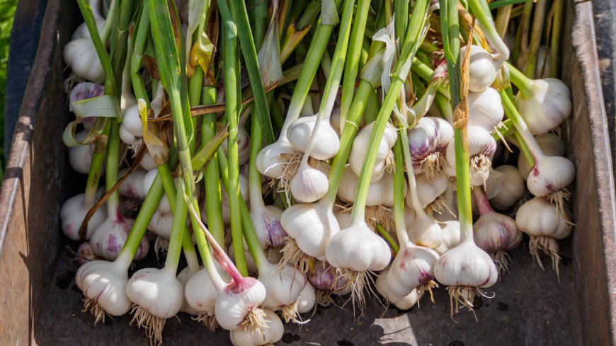 Доступные овощи: в России снизились цены на «борщевой набор»