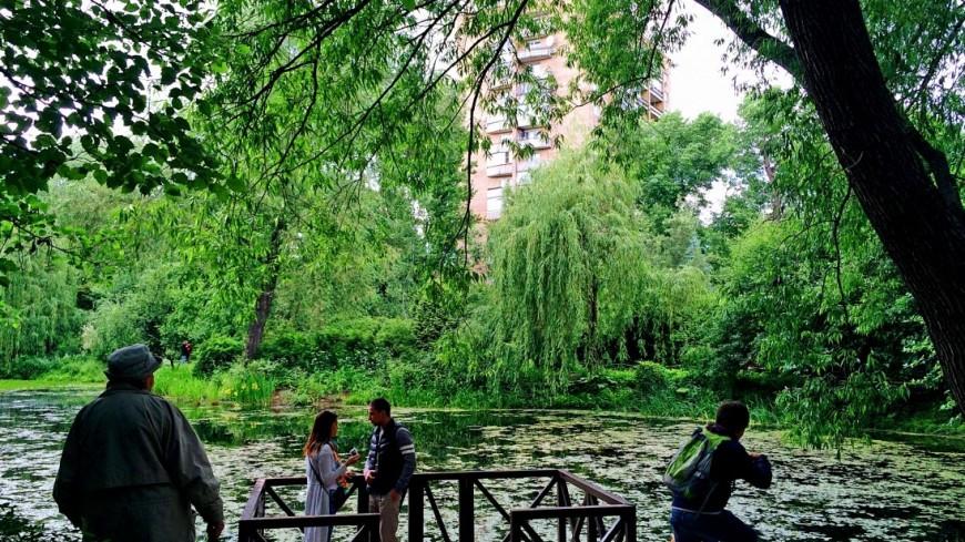 Хотят сажать, но не ухаживать: что происходит с деревьями в Москве