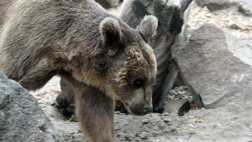 Собака спасла от медведя жителя Пермского края