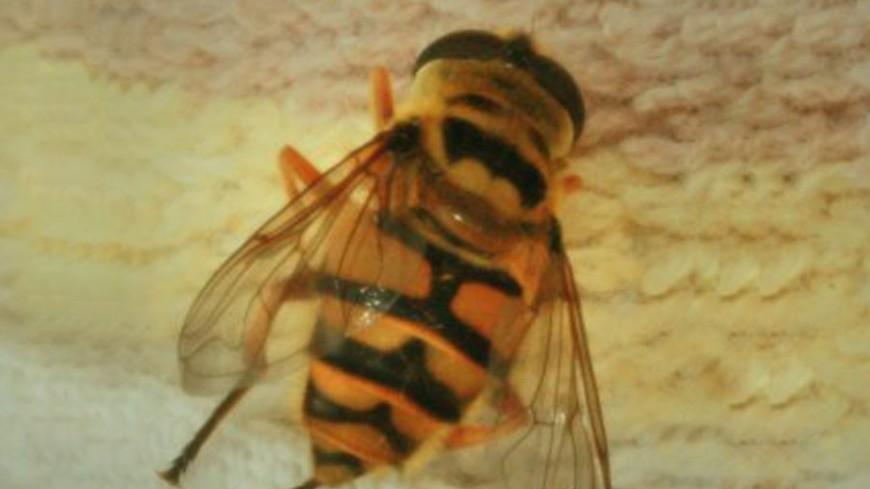 Ядовитые пчелы покусали Эвелину Бледанс в аэропорту Внуково