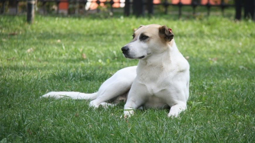 Нейросеть научили предсказывать поведение собаки