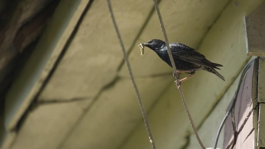 В Москву с приходом весны вернулись перелетные птицы