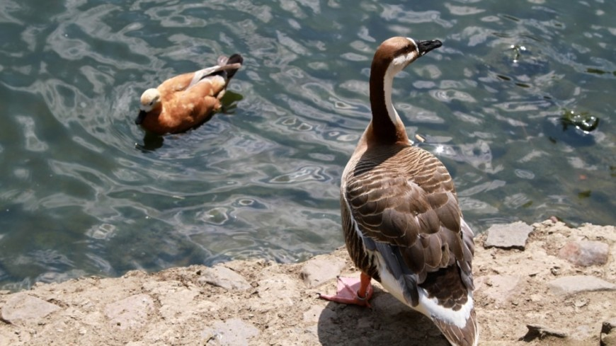 Весна на водоемах: как животные и птицы ведут себя в паводки