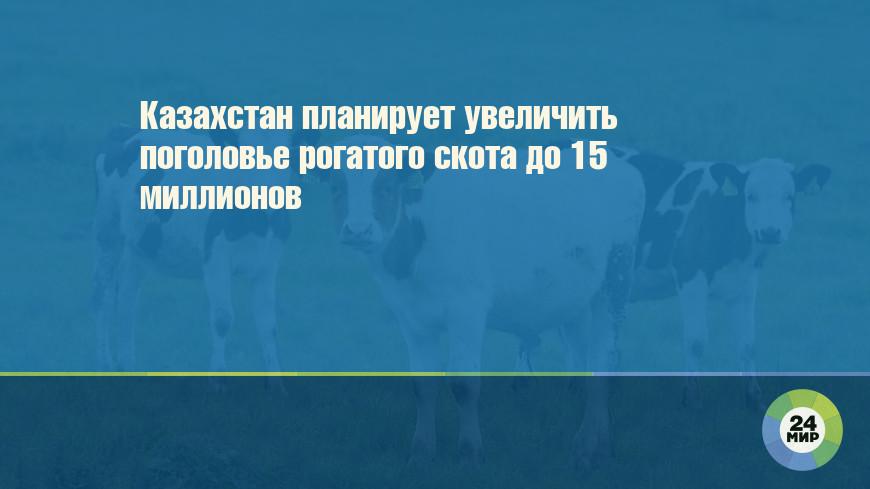 Казахстан планирует увеличить поголовье рогатого скота до 15 миллионов