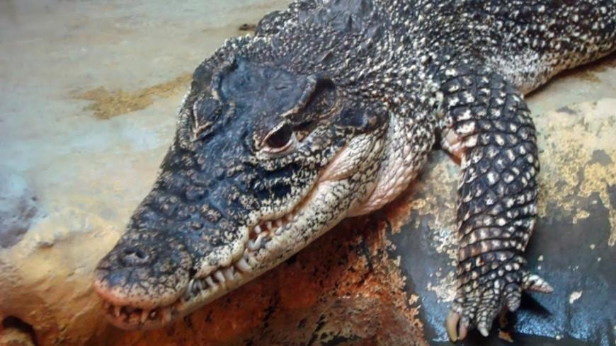 Более 50 крокодилов выползли на берег в Австралии