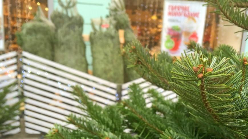 Москвичи смогут сдать елки в утиль