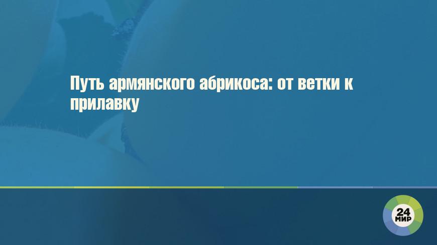 азербайджан новости шоу бизнеса
