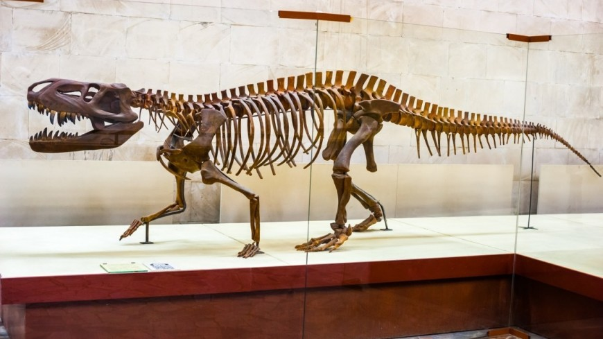 Парк юрского периода: можно ли воскресить динозавров?