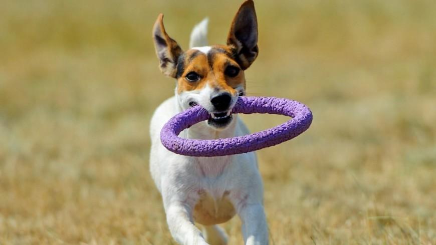 И в службу, и в дружбу: чем собаки полезны людям