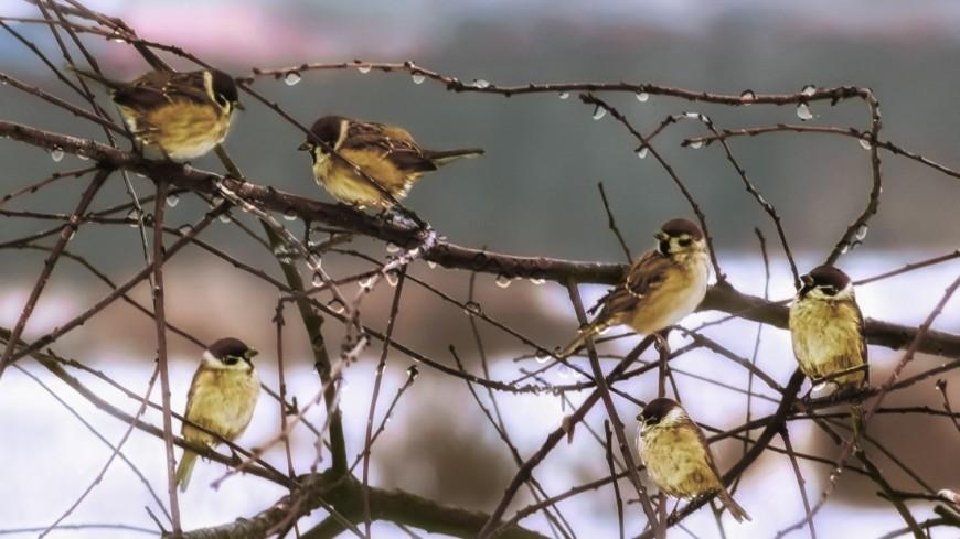 Пернатые рассказы. Почему 1 апреля – Международный день птиц?