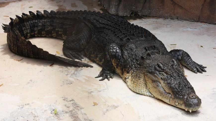 Крокодилов заставили слушать Баха в научных целях