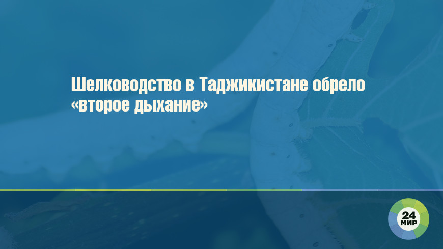 Шелководство в Таджикистане обрело «второе дыхание»